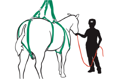 Loops system on a standing horse.