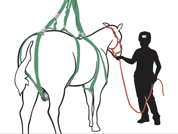 Vertical lift of recumbent horse using Simplified Loops Rescue System