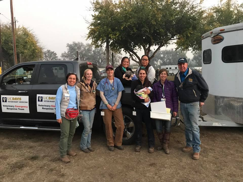 Team from UCD-VERT deployed to the Livestock Shelter for the Camp Fire at Gridley Fairgrounds on November 10, 2018.