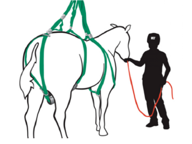 Loops system on a standing horse