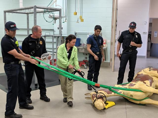 Dr. Costa training local firefighters on the Loops Equine Rescue System